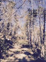 Da marzo a luglio taglio di rami e alberi lungo le linee Enel