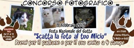 """Venerdì 17 febbraio a Loiano il 1° Concorso fotografico  """"Scatta la foto al tuo micio"""" in occasione della Festa Nazionale del Gatto"""