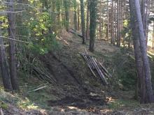 La 'C.A.S.P. Valle del Brasimone' si aggiudica i lavori alla pineta di Loiano